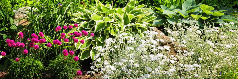 Flower bulbs - Fernhill