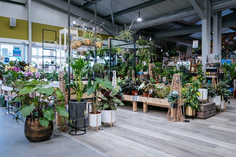 Indoor plants - Fernhill