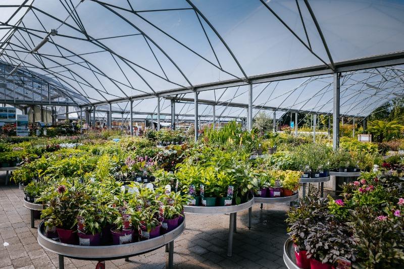 Outdoor plants - Fernhill