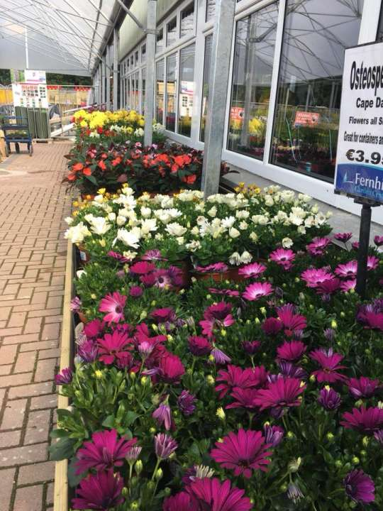 Gardening in Athlone? Go to Fernhill Garden Centre